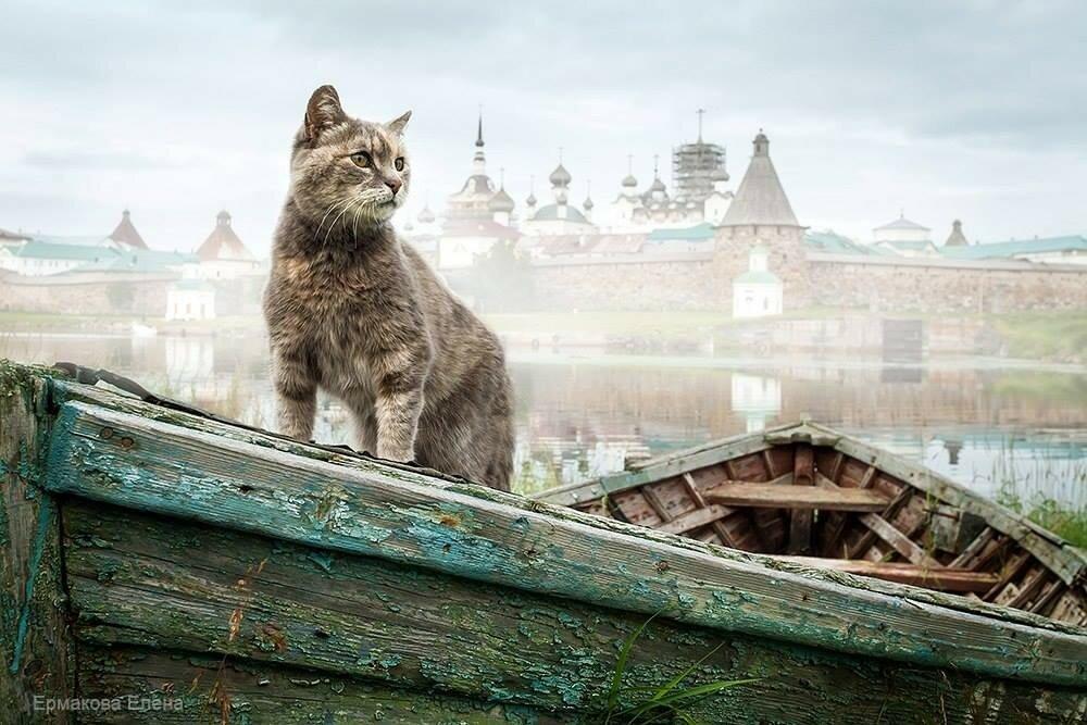 Бухта Благополучия, Большой Соловецкий остров. Автор фото Елена Аксенова.