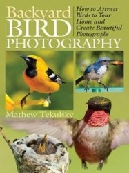 Backyard Bird Photography How to Attract Birds to Your Home and Create Beautiful Photographs