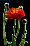 tubeclaudiaviza-flores184.png