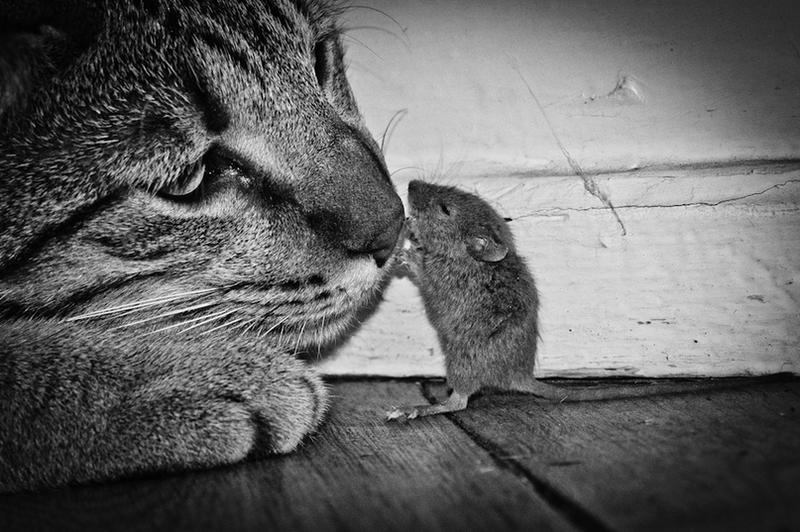 Картинки кошки и мышки, анимашки днем