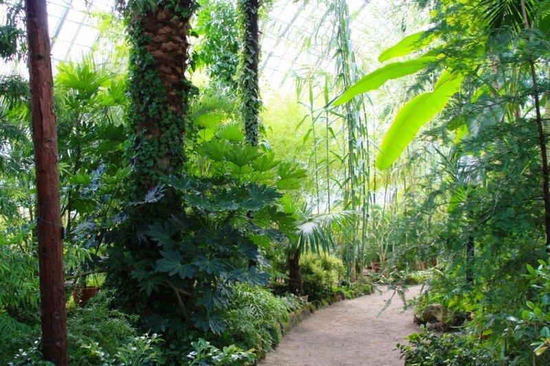 Пальмы, бананы и бамбук