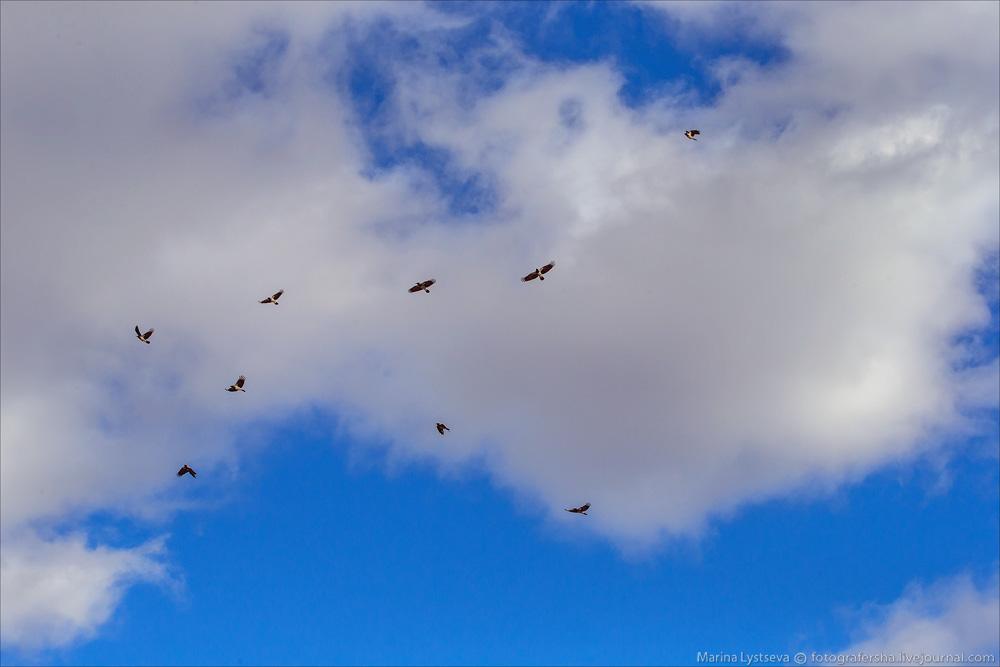 DME birds