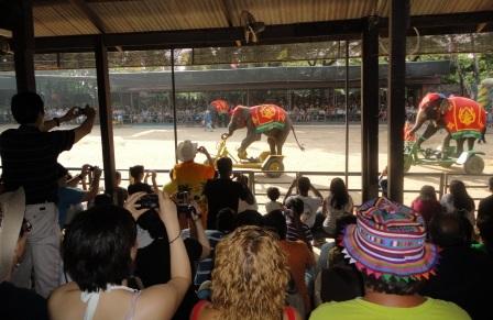 Слоны научились кататься на велосипеде