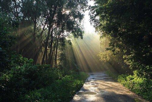 Луч света в тёмном лесе