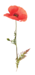 etd_add-on_summermeadow (19).png