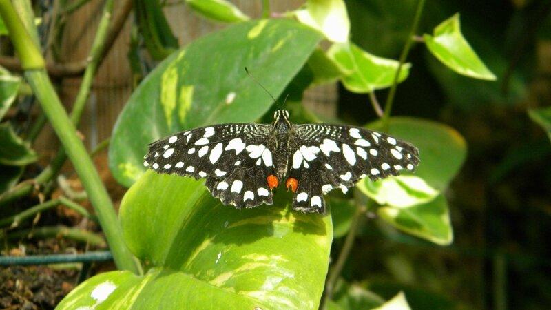бабочка позирует