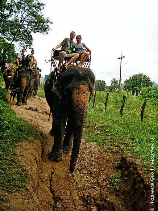 катание на слонах фото