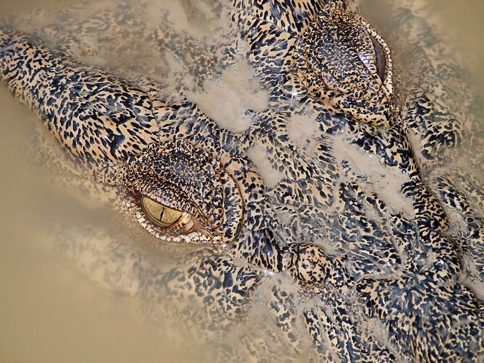 �����. ������ ���������� National Geographic � ����. �������, �����, �������, ��������, �����, �������, ������, ������, ���������, ������, �����, ������, �����, �����������, ������, ��������, �����, ������, �����, ������