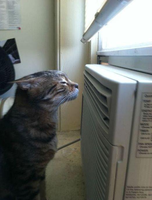 Кот около кондиционера прикольные фото
