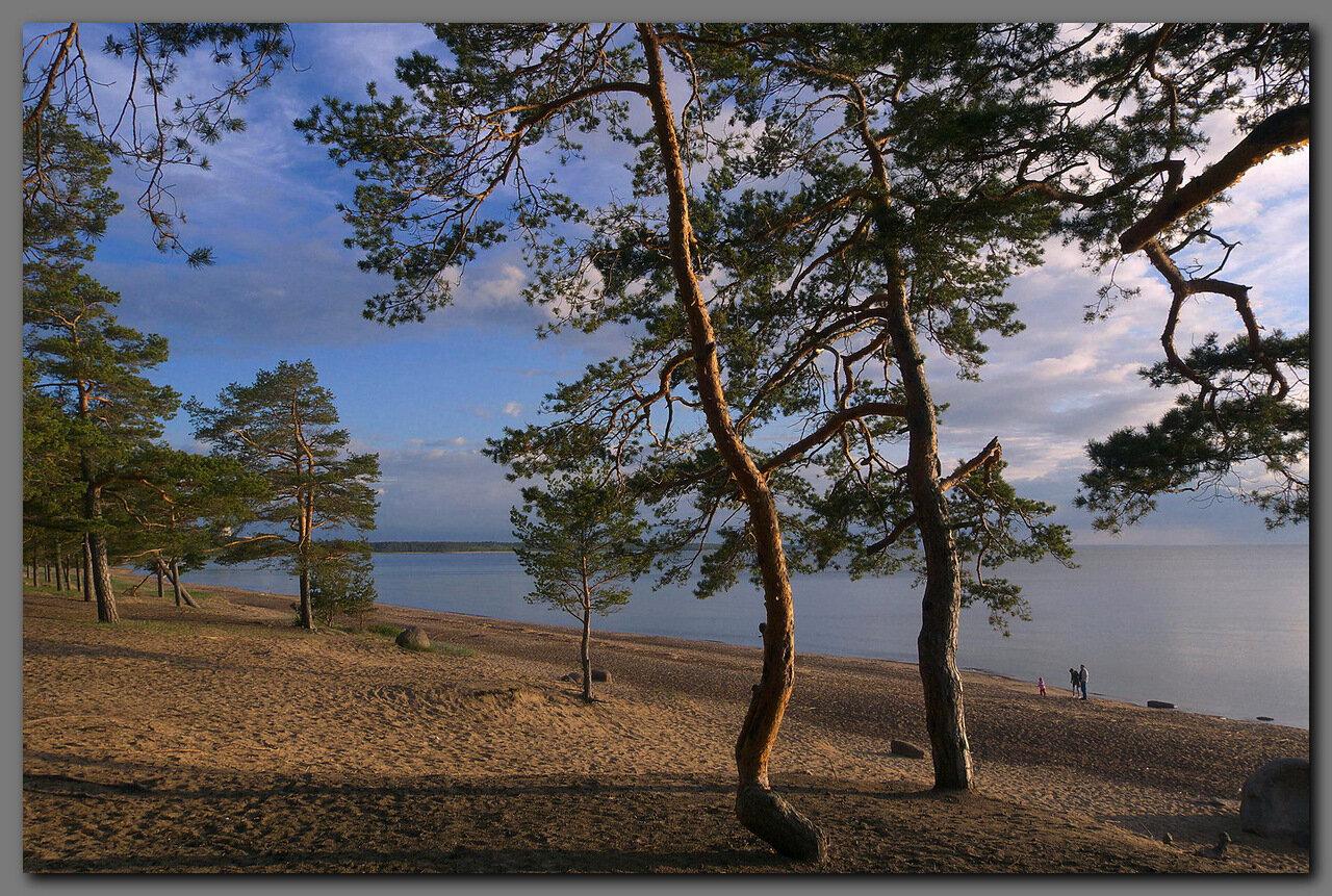 Пляж Липово - отзыв о Сосновый Бор, Сосновый Бор, Россия