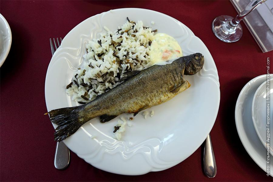 Запеченная радужная форель, рис микс, сливочный соус с перцем и зеленью. Костлявая рыбка