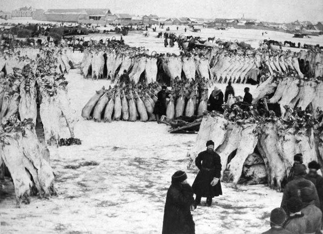 Торговля мясными тушами Курган 1903