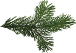 ial_slc_pine_branch.png