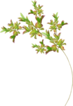 Lilas_Iced-Roses_elmt (65).png