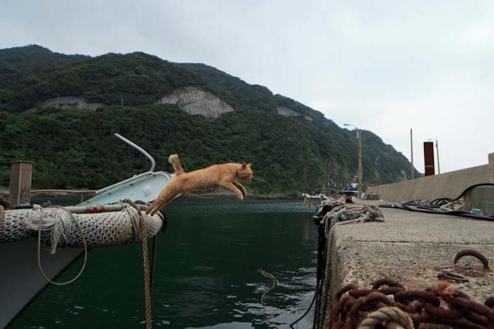 Фото 8 - Кошачий рай в Японии