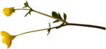 RR_CountryHome_AddOn (14).png