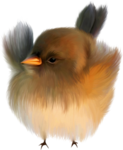 NLD Bird.png