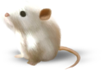 NLD Mice sh.png