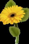 цветы-(259).png