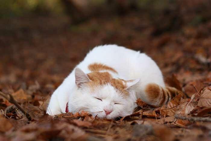 Кот, постигший нирвану