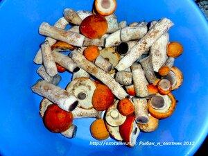 Тихая охота (грибы)