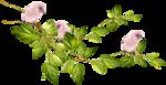 «Dreamin Pink» 0_99b01_e5359c8e_S