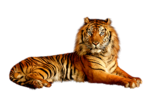 12926130966_animaux_nikita.png