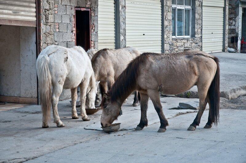 Лошадки перед работой