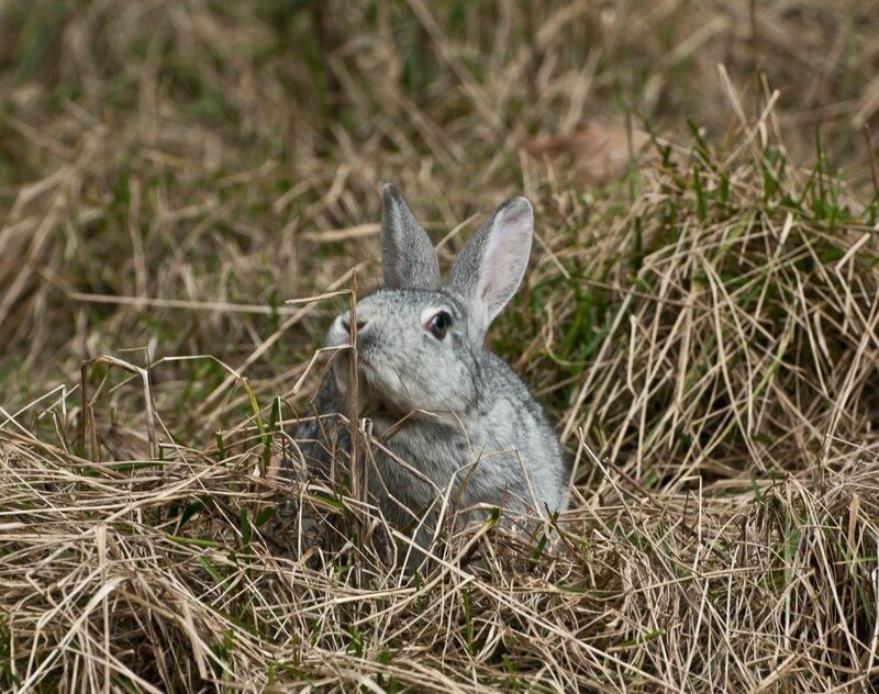 Мечтательный кролик