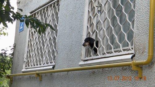 собака из окна