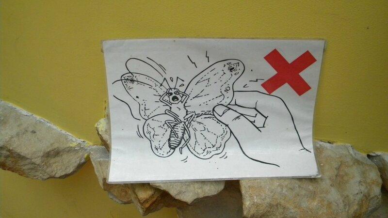 не трогай бабочек - им больно