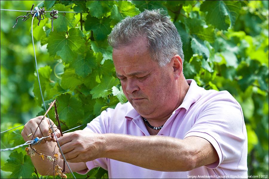Биодинамический виноградники