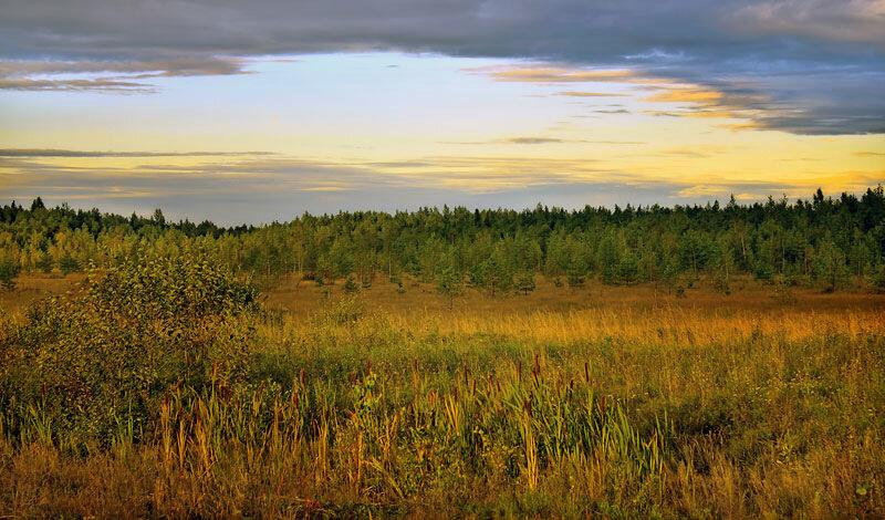 холм новгородской,