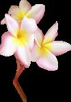 NLD SATSP Flower 2.png