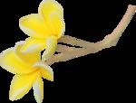 NLD SATSP Flower.png