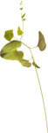 Lilas_Old-Garden_elmt (10).png