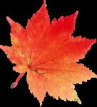 AutumnMelody_by GalinaV_el (47).png