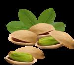 орехи-семечки (2).png