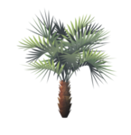 Tropical cycad.png