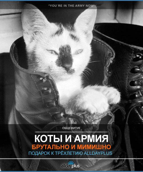 Коты ХХ века.