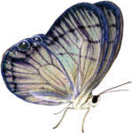 priss_Birthday_butterfly1.png