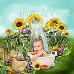 «AD_Sunflower_summer»  0_8c73d_2f87f6ab_S