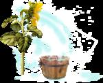 «AD_Sunflower_summer»  0_8c764_4cce1e5f_S