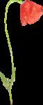 «Brigit_Flowery_Meadow» 0_8d486_3dd4d55d_S