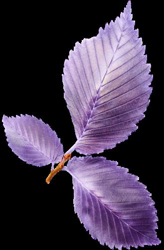 «Valentinas Creations_Violet Feelings» 0_8f630_757e9931_L