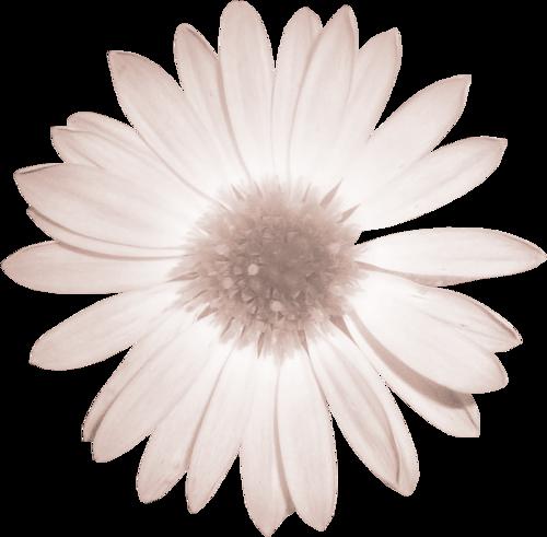 «Delph_PureSpirit»  0_8f9db_bcdef114_L