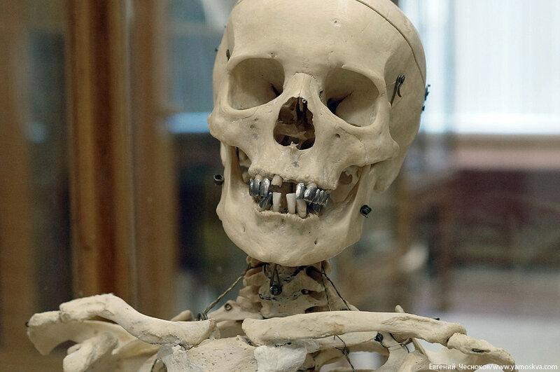 Лето. МГМУ. Музей анатомии. 27.08.15.50..jpg