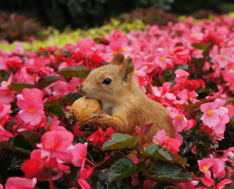 теперь я знаю, где грецкие орехи растут...