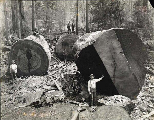 Лесорубы из прошлого