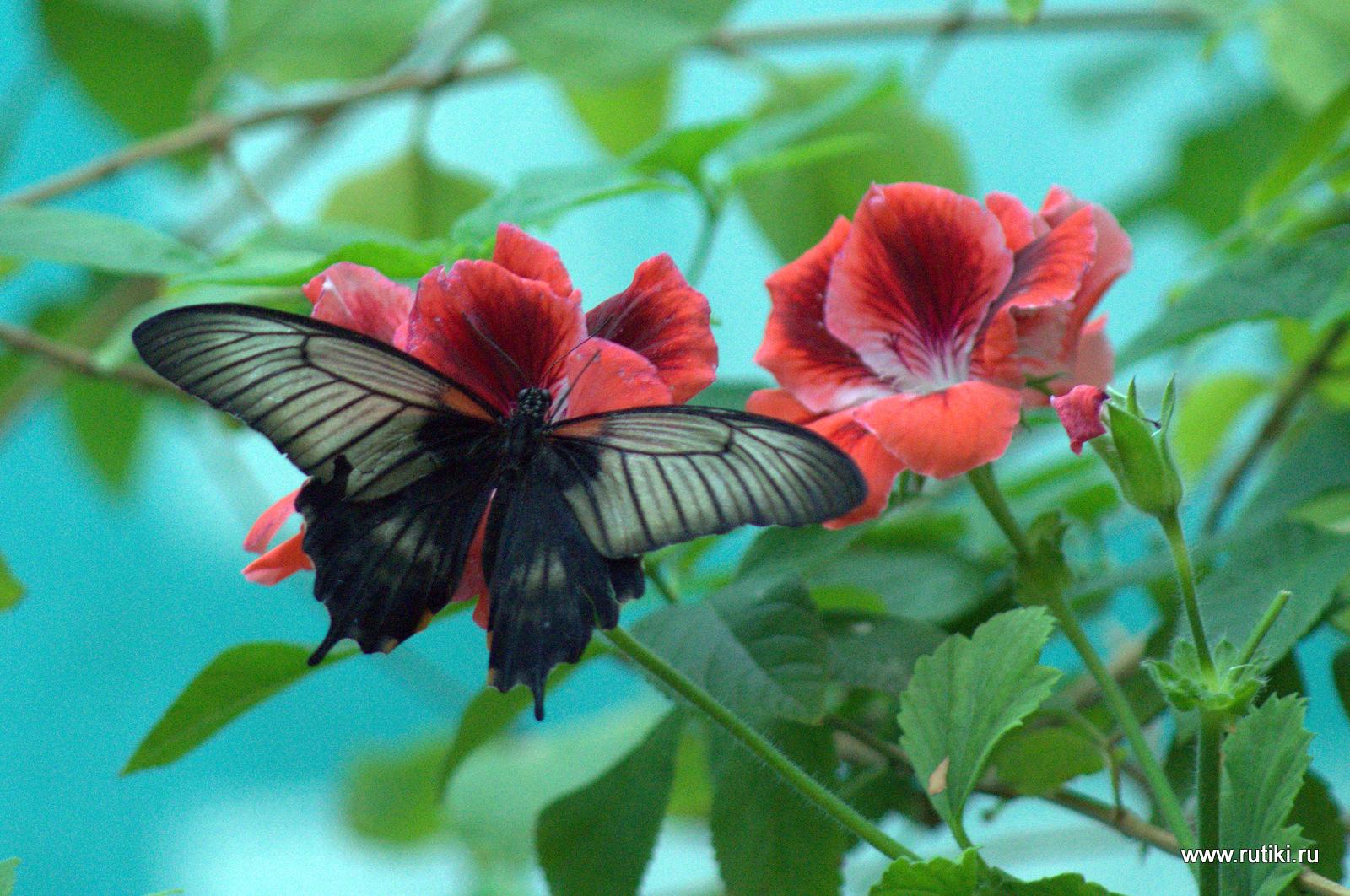 Выставка бабочек ВВЦ